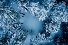 Snow Tree Tops