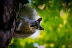 squirreldown1200-18